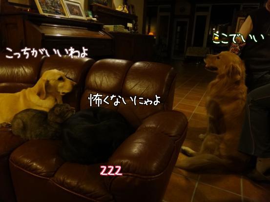 f0064906_16355880.jpg