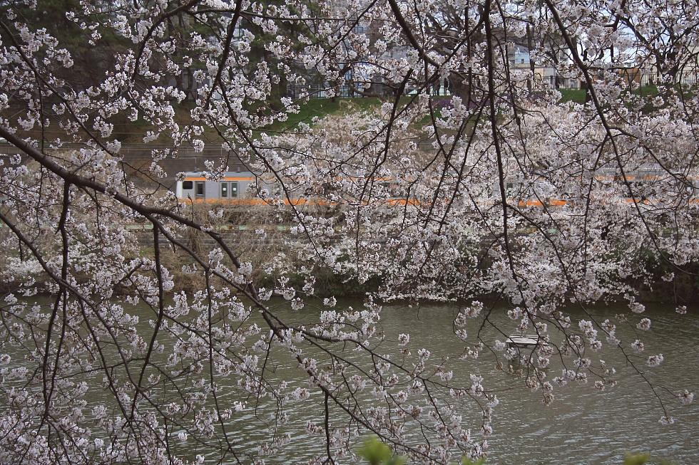 外濠の桜_b0190710_8213270.jpg