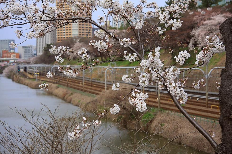 外濠の桜_b0190710_821716.jpg