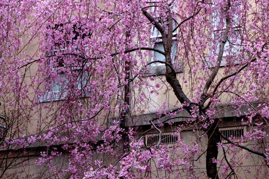 京都府庁 中庭_e0048413_2026361.jpg