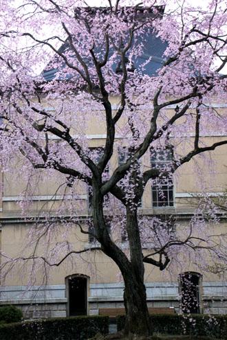 京都府庁 中庭_e0048413_20265060.jpg
