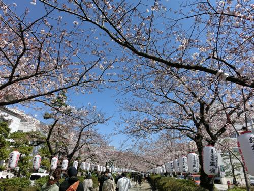 鎌倉のお花見_e0174913_11125439.jpg