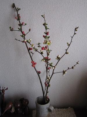 花。_b0157216_23105779.jpg