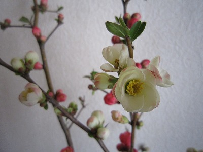 花。_b0157216_23115337.jpg