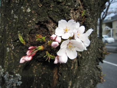 花。_b0157216_23135163.jpg