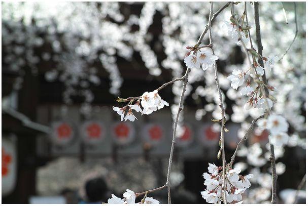 お花見宴会_c0042324_0191036.jpg