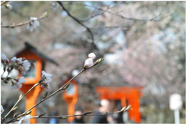 お花見宴会_c0042324_093064.jpg