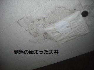 f0031037_1955931.jpg