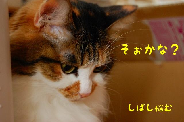c0181639_02363.jpg