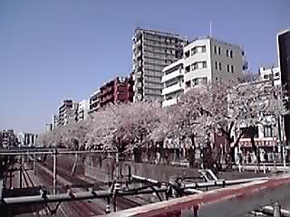 咲きましたねp(^-^)q_f0140343_12331710.jpg