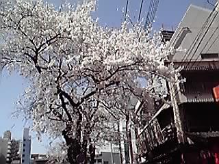 咲きましたねp(^-^)q_f0140343_12331777.jpg