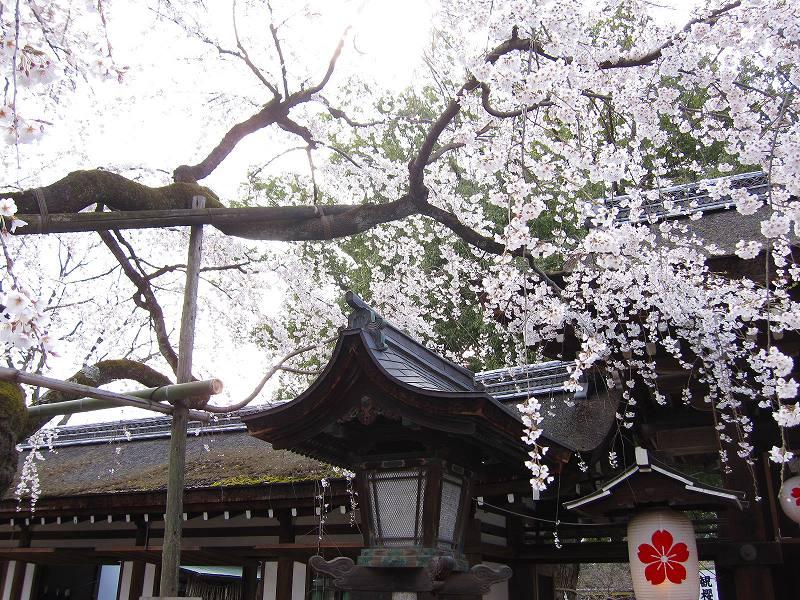 京都の御土居跡(おどいあと)-その2_e0237645_823694.jpg