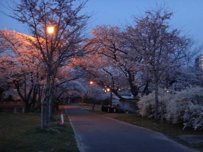 毛馬閘門の夜桜_e0270846_2212349.jpg