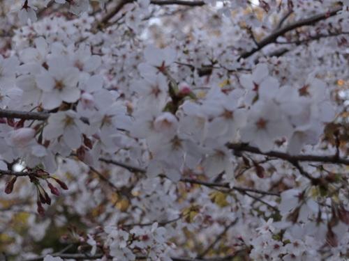 西行と桜 無事に終了いたしました_e0240147_23214670.jpg