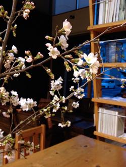 春と桜とウーパールーパーと_a0017350_075178.jpg