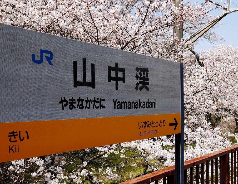 花と鉄道_b0093754_23105086.jpg