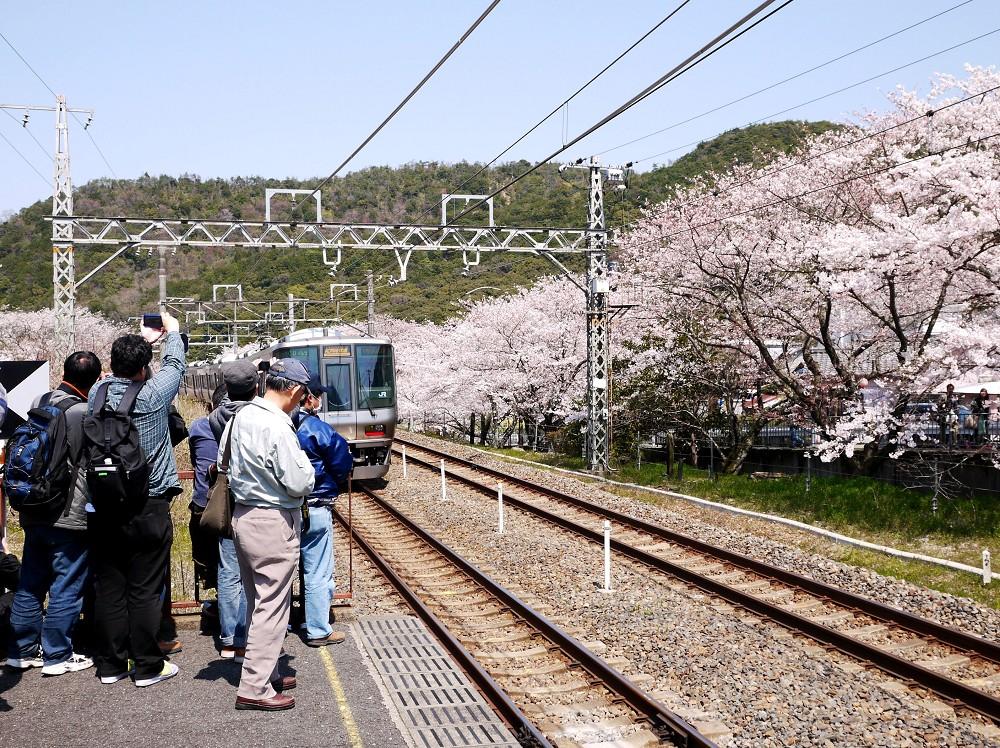 花と鉄道_b0093754_23111370.jpg