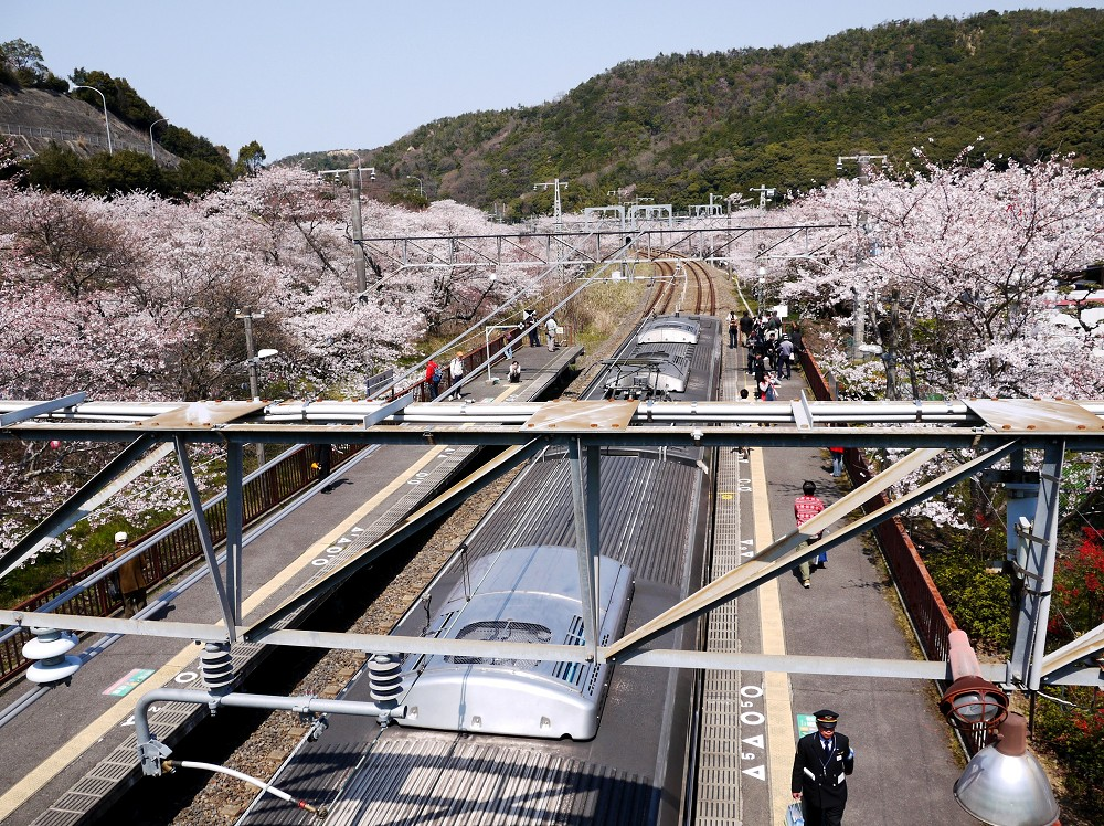 花と鉄道_b0093754_2311226.jpg