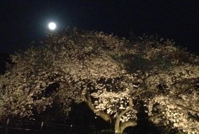 桜と夕日・満月…そして手料理~感動しました。_d0082356_10581214.jpg