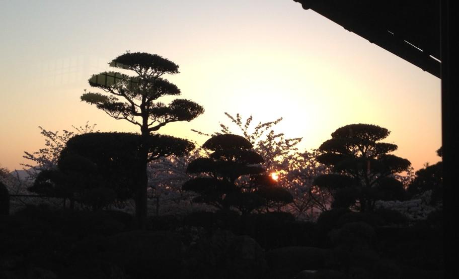 桜と夕日・満月…そして手料理~感動しました。_d0082356_1124859.jpg