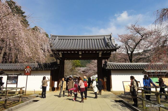 京都 桜めぐり♪_a0092659_21411489.jpg