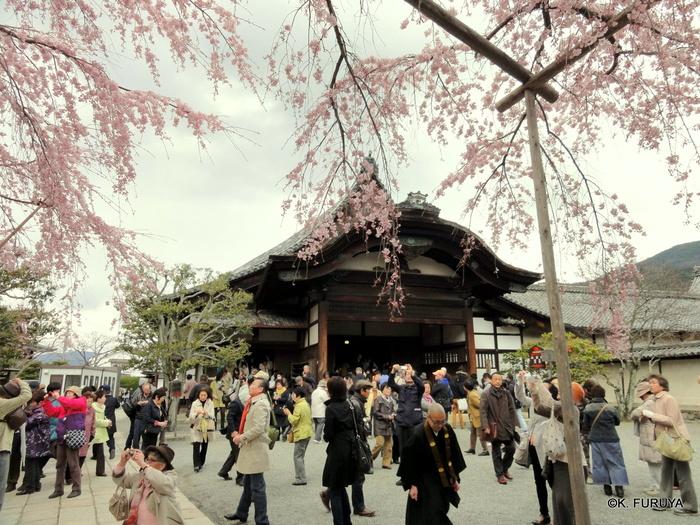 京都 桜めぐり♪_a0092659_21533484.jpg