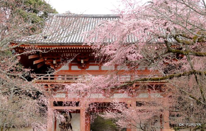 京都 桜めぐり♪_a0092659_2222440.jpg