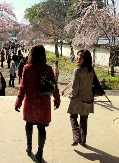 京都 桜めぐり♪_a0092659_2231526.jpg