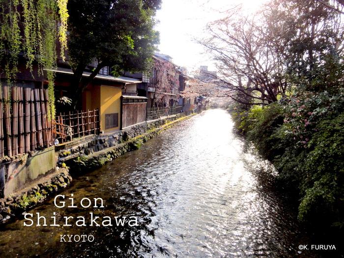 京都 桜めぐり♪_a0092659_22341459.jpg