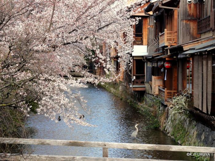 京都 桜めぐり♪_a0092659_22391389.jpg
