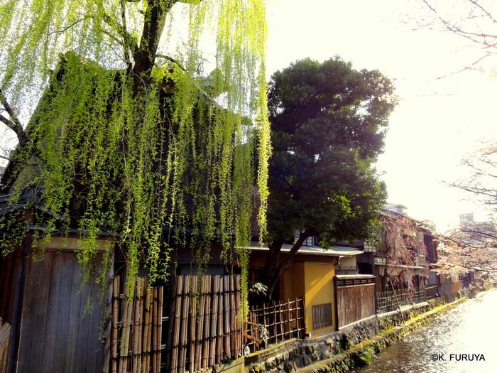 京都 桜めぐり♪_a0092659_2343312.jpg