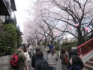 毎年恒例の桜坂お花見・満開にはもう少し…_b0160959_1131498.jpg