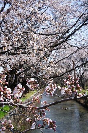 昭和記念公園_a0163160_23173510.jpg