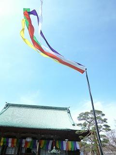 6 hours その3  富士見坂のち護国寺でお花見♪_a0165160_16491847.jpg
