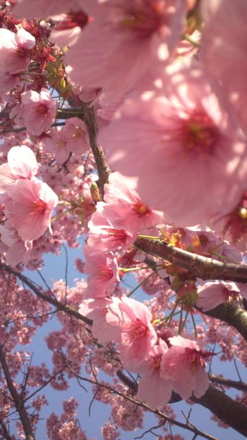 美しい朝。。。イースターサンデー2012 Very Happy Easter。。。 *。:☆.。† _a0053662_22391373.jpg