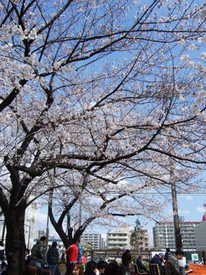 ☆お花見☆                       東京_e0184067_11464140.jpg