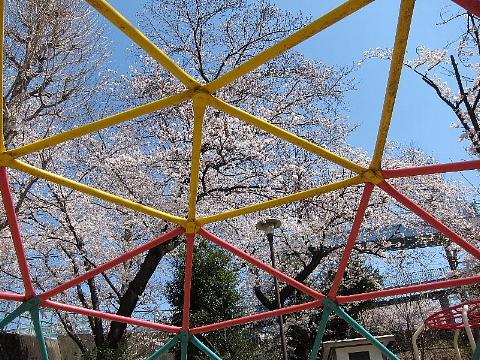 桜を、どう撮りましたか。_b0141773_22503282.jpg