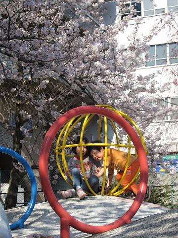 桜を、どう撮りましたか。_b0141773_2250491.jpg