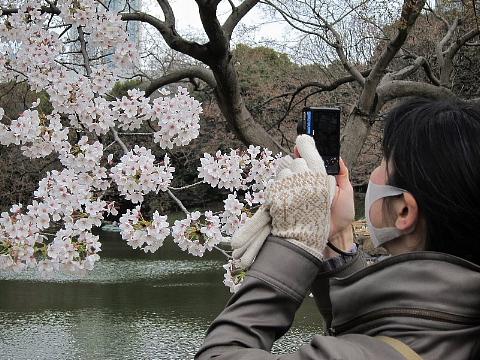 桜を、どう撮りましたか。_b0141773_22531769.jpg