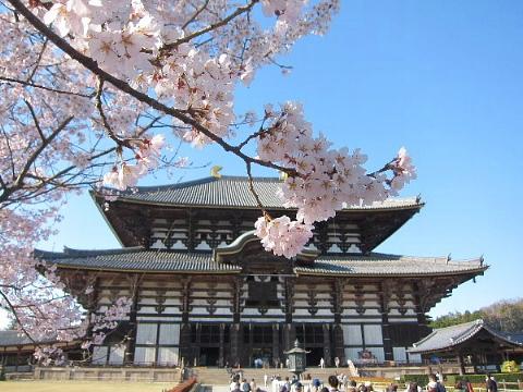 桜を、どう撮りましたか。_b0141773_22534991.jpg