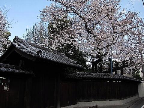 桜を、どう撮りましたか。_b0141773_22542972.jpg