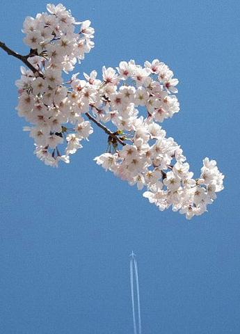 桜を、どう撮りましたか。_b0141773_22595761.jpg
