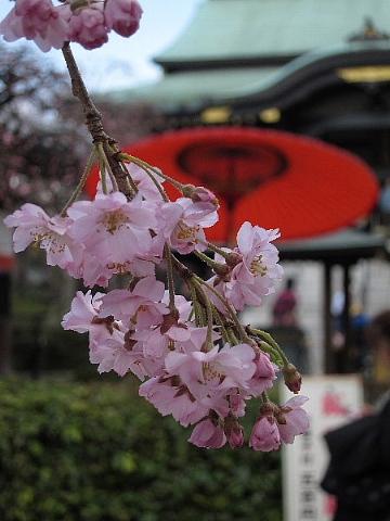 桜を、どう撮りましたか。_b0141773_2301251.jpg