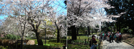 散歩を楽しく/週末のお花見_d0183174_8431431.jpg