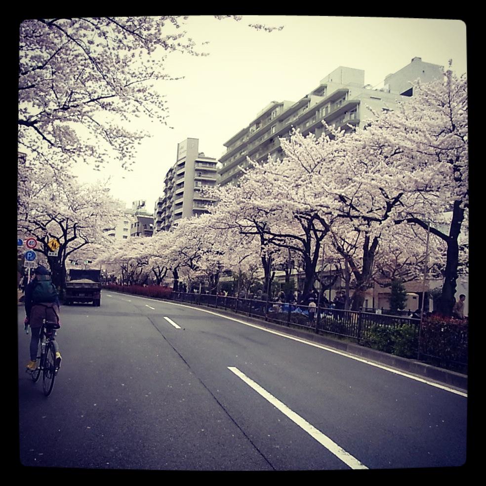 2012.4.7 TOKYO桜Ride ~桜セブンサミッツ縦走~_b0219778_11251549.jpg