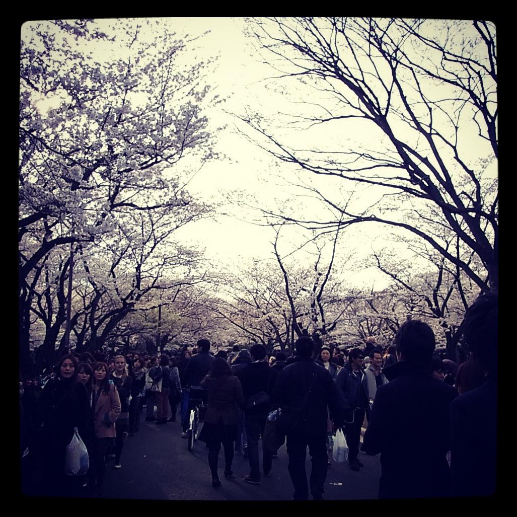 2012.4.7 TOKYO桜Ride ~桜セブンサミッツ縦走~_b0219778_11302515.jpg