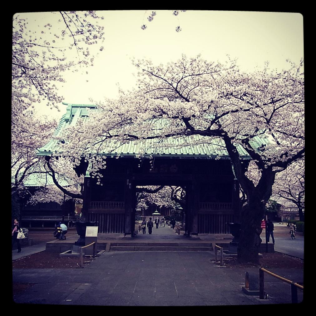 2012.4.7 TOKYO桜Ride ~桜セブンサミッツ縦走~_b0219778_113219100.jpg