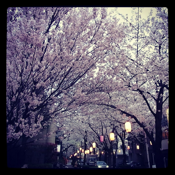 2012.4.7 TOKYO桜Ride ~桜セブンサミッツ縦走~_b0219778_11322891.jpg