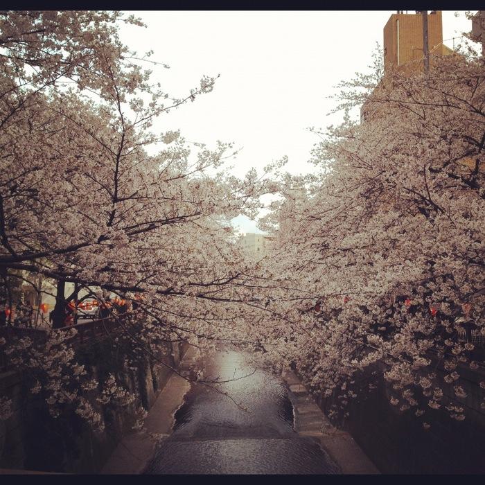 2012.4.7 TOKYO桜Ride ~桜セブンサミッツ縦走~_b0219778_1133126.jpg