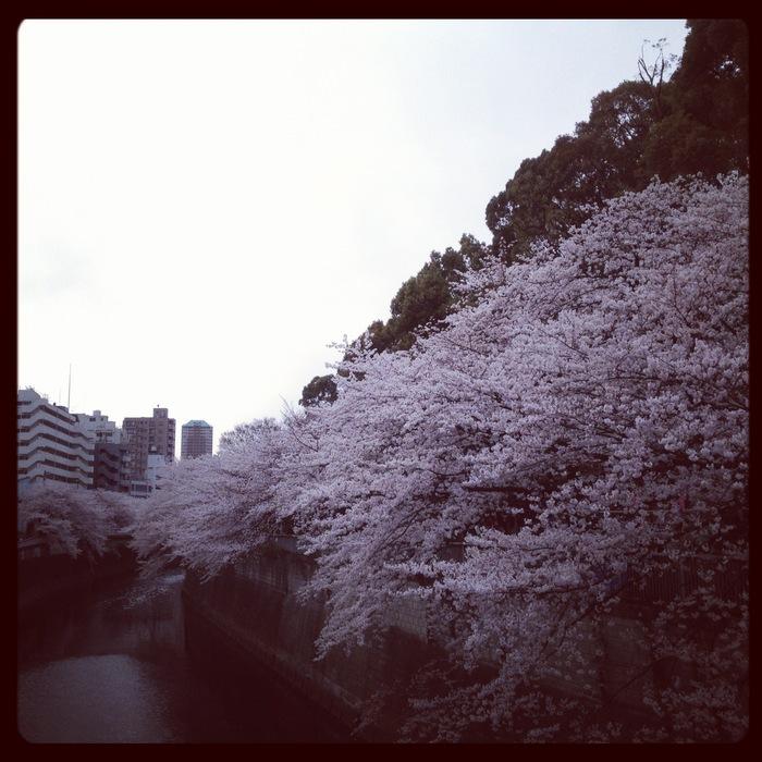 2012.4.7 TOKYO桜Ride ~桜セブンサミッツ縦走~_b0219778_11333748.jpg